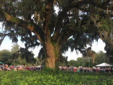 Live music under the big Oak at Airlie Gardens. Photo by Shannon Rae Gentry